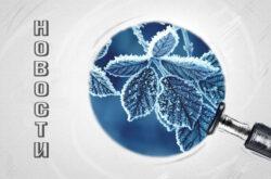 Новые клиенты BonSens зима 20-21